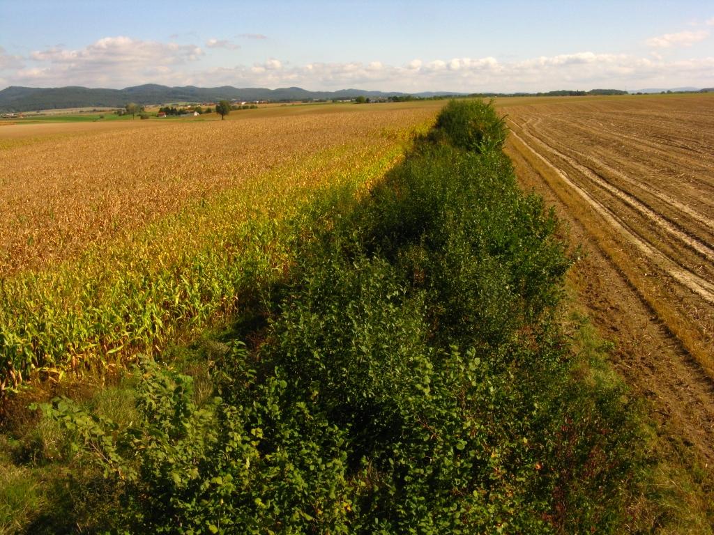 Zahnašovice - krajinné výsadby